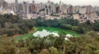 Apartamento - Cambuci - São Paulo